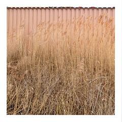Grass (ngbrx) Tags: sand kerns obwalden switzerland schweiz suisse svizzera grass gras container zentralschweiz