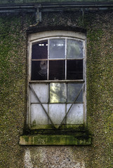 Spot The Pigeon (nigdawphotography) Tags: pigeon bird avian window broken pane glass royalgunpowdermills essex