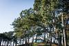 (Charlie Little) Tags: cumbria landscapes silloth nikon d7100 trees pavilion