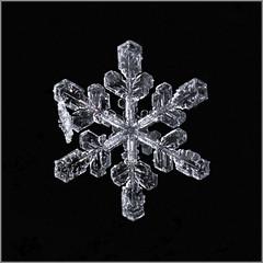 Snowflake (Margo Dolan) Tags: dof snowflake crystal snow ice cold winter blackandwhite monochrome closeup outdoor frozen focusstacking