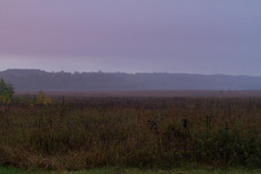 Dixon_JB_359_3757 (Joanne Bouknight) Tags: bunkhouse dixonwaterfowlrefuge illinois mist morning rain storm sunrise thewetlandsinstitute yard