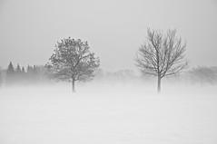 Deux solitudes/Two Solitudes (bob august) Tags: 2018 2018©rpd'aoust arbres bw blackwhite brume canada d90 février hiver mist montréal neige nikkor18135mm nikon nikond90 noiretblanc parcjarry snow trees villeray winter
