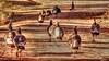 Turkeys on the road (kfpsardou) Tags: wildturkeys road 118picturesin2018