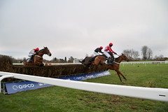 Rock On Rocky (10/1) (Alan_Davies) Tags: animals ascot horse racecourse