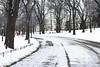 (Kunal Baweja) Tags: tree park parks centralpark winter winters snow newyork newyorkcity nyc usa unitedstates canon daylight day tour tourism tourist worldtour travel worldtravel trip