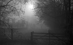 When the sun lost its shadows (Rosenthal Photography) Tags: dezember gatter herbst zaun bnw schwarzweiss anderlingen 35mm natur bäume asa400 pflanzen ff135 winter wiese städte 20171202 ilfordhp5 bw olympus35rd analog rodinal150 dörfer siedlungen landscape moning mist fog december autumn mood blackandwhite trees fields fram olympus olympus35 35rd fzuiko zuiko 40mm f17 ilford hp5 hp5plus rodinal 150 epson v800
