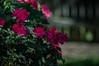 Happy Fence Friday! (Jims_photos) Tags: outdoor outside oldfence adobelightroom adobephotoshop shadows daytime daytimefence fencefriday flowers happyfencefriday jimallen jimsphotos jimsphotoswimberleytexas lightroom landscape nopeople nikond750