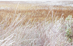 Frozen Winter Marsh (Charles Opper) Tags: canon georgia midway winter color frozen ice landscape marsh nature snow