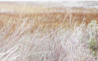 Frozen Winter Marsh