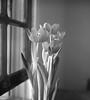 A Simple Life (Luiz L.) Tags: luizlaercio film rolleiflex