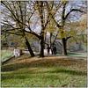 Last Autumn Days (Koprek) Tags: rolleiflex28f kodak portra 160 čakovec croatia film medium format autumn 2017 november