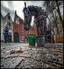 Shit! (glessew) Tags: shit stront paard horse cheval pferd brugge bruges vlaanderen westvlaanderen belgië belgique belgium
