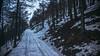 Neve sporca (AleAinaz) Tags: mompantero piemonte italia it incendio valle di susa torino boschi rocciamelone montagna alberi