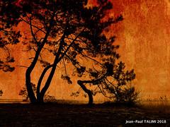 COUCHANT (JEAN PAUL TALIMI) Tags: aquitaine arbre jeanpaultalimi jardin landes ombres lac aquarelle pins biscarrosse pindeslandes nature sudouest