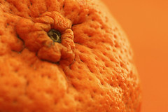 mandarine (maotaola) Tags: macromondays citrus orange monochrome textura texture macrophotography macro composition ruleofthirds food alimento macrofotografía mandarine mandarina fruit cmwdorange