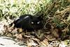 neko-neko1986 (kuro-gin) Tags: cat cats animal japan snap street straycat 猫 sigma dp2