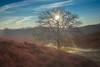 Sunny & Cold (sconi piladi) Tags: veluwezoom veluwe netherlands arnheim arnhem nederland niederlande nationalpark morning sunrise morgen sonnenaufgang hügel hills baum tree sky landscape himmel