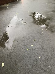 Rainy day (光輝蘇) Tags: fri 20180119 47 morning peaks kk