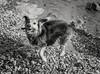 ¿Felicidad perruna? ¡La playa! (christiangildieguez) Tags: dog perro felicidad happiness nature animal beach spain