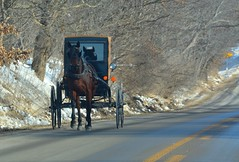 An Uphill Climb. New Wilmington, PA (bobchesarek) Tags: buggy horse transportation amish padutch harness hitch country backroads newwilmington pennsylvania