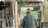 img239 (Giulio Gigante) Tags: film analog filmisnotdead landscape colori colors eccoqua abruzzo italia italy giulio giuliogigante giuliogigantecom paesaggio documentario document documentary strada mare adriatico adriatic coast scan negative ways project progetto analogico rebecca place 35mm kodak portra160 albero cancello erba cielo