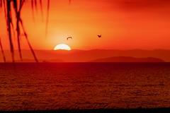 Coucher de soleil spectaculaire sur le Pacifique (Pyc Assaut) Tags: peru soleil disparaît derrière lhorizon soleildisparaîtderrièrelhorizon sun sunset perou pérou amériquelatine amériquedusud pacific oceanpacific ocean rouge orange jaune oiseaux palmier montagnes bateau nuages pyc5pycphotography pyc5pyc pycassaut couchers de spectaculaires sur le pacifique couchersdesoleilspectaculairessurlepacifique pisco borddemer seaside plage beach pyc assaut coucher spectaculaire iles îles island islands pelican