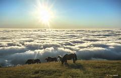 Viviendo el día (Jabi Artaraz) Tags: jabiartaraz yeguas pottoka potro horse animal niebla amanecer sol sun nature