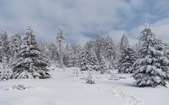 Weiße Pracht (Teelicht) Tags: harz schnee winter snow deutschland germany