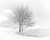Winterbaum (uhu's pics) Tags: highkey xpro fuji weiss schwarz white black sw bw kalt cold schnee snow winter baum tree landschaft landscape