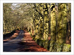 Ancient Trees (linda.addis) Tags: 7dwf landscape
