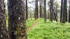 2016-06-28 13.48.50_preview (Stubben Hansen) Tags: vikebygd green woods tree trees grass moss old forest path nature landscape sky norway