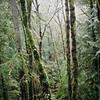 greenscape (manyfires) Tags: film analog hasselblad hasselblad500cm square mediumformat landscape forest trees green verdant moss ferns pdx portland pnw pacificnorthwest forestpark
