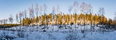 The Front Line (ristoranta) Tags: rock rivi luonto birch pine rintama kallio line panorama nikond7100tamron16300mmf3563 snow lumi maisema metsä kasvi tree puu forest talvi frontlines panoraama koivu winter row mänty