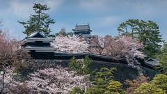 Matsue-Jô (David Hédin) Tags: 2012 matsue chugoku château japon jp