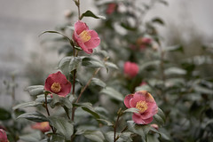 DSC00114 (@saka) Tags: autoupload flowers 61556169