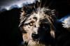 (salernolorenza) Tags: d5100 nikon all'aperto ice ghiaccio dog cane