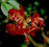 Lyon Arboretum (sembach001) Tags: flower flowers garden gardens honolulu hawaii oahu panasoniczs100 nature lyonarboretum
