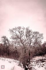 Winter scene (picsbyCaroline) Tags: tree winter sky grass scotland park landscape forest trees cold