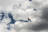 Wings of freedom (Groman123) Tags: germany deutschland canon eos 700d summer sommer sauerland vogel bird freiheit freedom wings flügeloutdoor drausen sky himmel natur nature sun clouds wolken sonne creativecommons cc ccbysa nrw