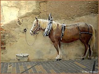 Trompe-l'oeil du cheval devant l'écurie