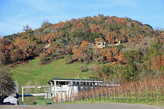 The Hills of Glen Ellen (JB by the Sea) Tags: glenellen sonoma sonomacounty california winecountry sonomavalley january2018 imageryestatewinery winery vineyard