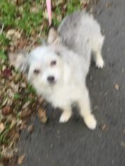 IMG_9060 (earthdog) Tags: 2018 dog pet animal liveanimal needstags needstitle canon canonpowershotsx720hs powershot sx720hs