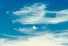 Moffett F-14 3 climb 8 x sharp (wbaiv) Tags: united states navy fighter jet aircraft airplane fleet defense air superiority grumman f14 tomcat longrange airdefense swingwing effective dogfighter flight inflight aloft airborne flying intheair