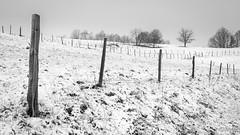 Foret de poteau (Nu Mero) Tags: hiver paysage nb neige valléedevillé nature neuveéglise grandest france fr