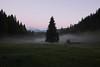 Die Fichte (g e g e n l i c h t) Tags: landschaft werdenfelserland fichte almwiese morgen nebel