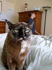 DSC00045 (classroomcamera) Tags: home bedroom bed cat angry frustrated annoyed green eyes whiskers sitting eye contact walk walking movement motion action foreground background