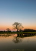 Pond reflection at dusk (R M Photography) Tags: nikon nikonfxshowcase inspiredbylove d3300 sky sunset eyebridge dusk tree trees tokina tokina1116 tokina1116mm