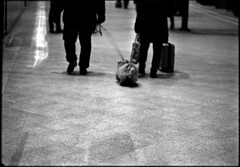 A la gare, un soir (Rachelnazou) Tags: caffenol blackwhite minolta film ilford analog argentique