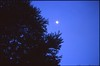 (✞bens▲n) Tags: contax g2 kodak e100g 45mm f2 carl zeiss film analogue reversal night sky moon trees blue