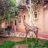 Patio giraffe / Marrakech/ Morocco (littdiva) Tags: marrakech morocco travel globalnomads postcardsfromtheworld
